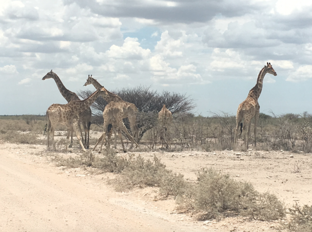Friendly-Madrid-Etosha-
