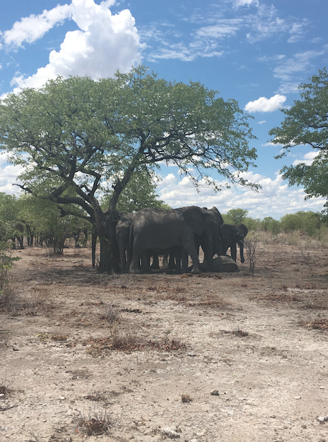 Friendly-Madrid-Etosha-Safari